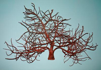 Palm_tree_stalk